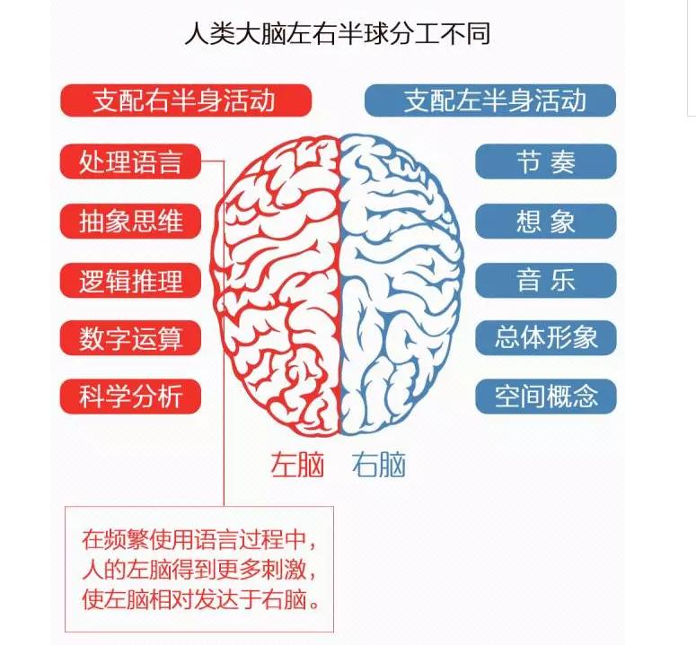 人脑.png