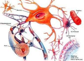 脑肿瘤68基因